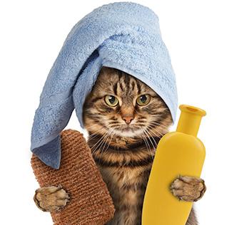 Программа курса грумер Кошки